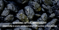 Chasing after minerality, relationship to yeasts nutritional stress and succinic acid production