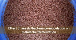 Effect of yeasts/bacteria co-inoculation on malolactic fermentation of Tempranillo wines