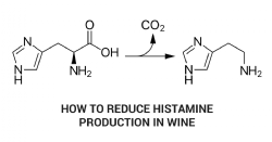 Indigenous O. oeni strain selection as a malolactic fermentation starter culture to avoid the histamine production in wine