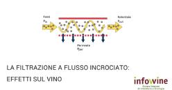 Effetti sensoriali e chimici della filtrazione a flusso incrociato nei vini bianchi e rossi