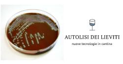 Induzione dell'autolisi in Saccharomyces bayanus mediante omogeneizzazione ad alta pressione