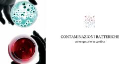 Un derivato della chitina specifico per il controllo dei batteri lattici ed acetici in cantina
