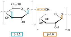 Uso potencial de (1-3, 1-6)-ß-glucanos de las lías de levadura como ingredientes alimentarios funcionales