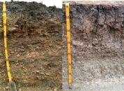 Les effets de la réduction de l'irrigation sur le comportement des vignes de Pinot noir dans des sols sablo-limoneux graveleux et argilo-limoneux