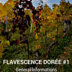 Video Clip - Flavescence Dorée #1 - General informations