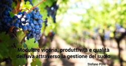 Modulate vigor, productivity and grape quality through soil management