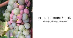 Marciume acido: eziologia, biologia e gestione