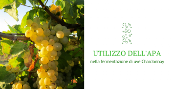 Utilizzo dell'apa nella fermentazione di uve Chardonnay