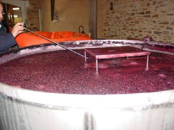 Effet de la durée de la macération sur la composition phénolique et l'évolution de la couleur de vins issus de trois variétés de raisin