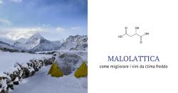 FML - Un outil pour réduire l'acidité et améliorer l'arôme dans des conditions climatiques froides