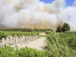 Response to wildfire impact on CA wine industry and smoke taint