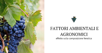 Effetti dell'ambiente e delle pratiche viticole sulla composizione fenolica dell'uva: l'impatto sulle proprieta' sensoriali