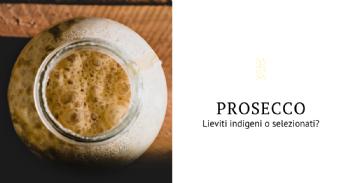 Levaduras indígenas seleccionadas para la producción de Conegliano-Valdobbiadene Prosecco Superiore DOCG
