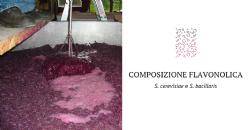 Effetti di due specie di lievito, Saccharomyces cerevisiae e Starmerella bacillaris, sulla composizione flavonolica di vini prodotti da uve Sangiovese.