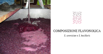 Efecto de dos especies de levadura, Saccharomyces cerevisiae y Starmerella bacillaris, sobre la composición flavonólica de los vinos
