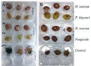 Leveduras presentes nas uvas bravias: alternativa biológica aos pesticidas