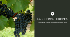 WINE RESEARCH in EUROPE: Grapevine trunk diseases, Grapevine viruses, Management of the organic matter in the soil