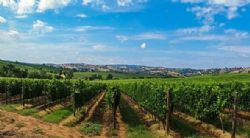 Academics Explain Terroir But Not Exactly The Way Wine Consumers Might Expect