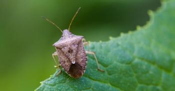 Estudio sobre defensa sostenible de la vid y especies invasoras