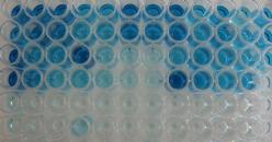 Metodo ELISA automatizzato per una rapida valutazione della presenza/assenza di lisozima nel vino