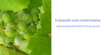 Aplicación de la espectroscopia del visible/infrarrojo cercano para evaluar en bodega uvas contaminadas