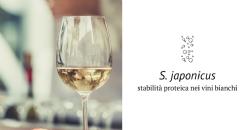 Schizosaccharomyces japonicus: lievito con elevata capacità di rilascio di polisaccaridi. Valutazione dell'impatto sulla stabilità proteica dei vini