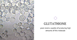 Evolutionary strategies to develop high-Glutathione yeast strains for winemaking