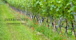 Concurrence hydrique de l'enherbement dans les vignobles : études de cas dans les terroirs méditerranéens