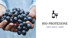 New tools for biocontrol in the production of fine wines