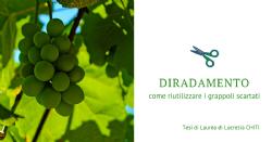 Produzione di estratti ad attività antiossidante da uve da diradamento: confronto fra differenti varietà bianche e rosse
