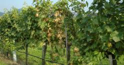 18emes Rencontres Rhodaniennes : changement climatique, dépérissement du vignoble, réduction des intrants