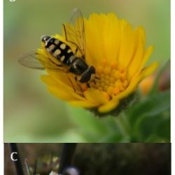 agrobiodiversidade funcional