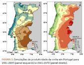 Impactos das alterações climáticas e medidas de adaptação para a viticultura portuguesa