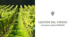 Gestión del viñedo: Actualización Temática