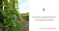 """Vitigni Resistenti/Tolleranti """"La Rivoluzione Vitivinicola"""""""