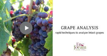 Spectroscopie par proche infrarouge et vision hyperspectrale : techniques non invasives et rapides pour déterminer la composition des raisins intacts