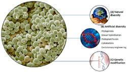 Desacidificação biológica de mostos e vinhos: podem as leveduras enológicas melhorar a palatabilidade do vinho?