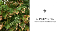 New tool in the fight against grapevine trunk disease