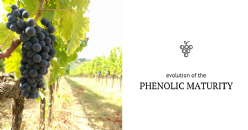 Phenolic maturity in cv. Sangiovese: evolution of the characteristics of anthocyanins and tannins in skin and seeds