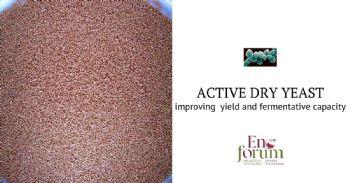 Mejora de la eficiencia fermentativa de levaduras vínicas por tratamiento con antioxidantes de grado alimentario durante su producción en forma de levadura seca activa (LSA)
