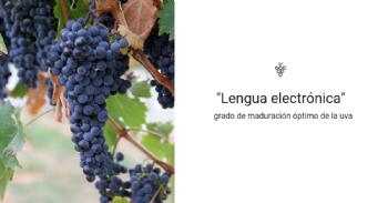 Diseñan una 'lengua electrónica' para conocer el grado de maduración óptimo de la uva