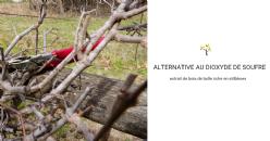 La madera de poda de la vid podría sustituir a los sulfitos para la elaboración del vino tinto