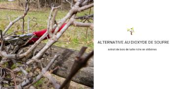 Le bois de taille des vignes pourrait remplacer les sulfites dans l'élaboration du vin rouge