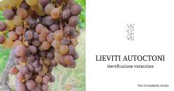Dal vigneto al vino finito, identificazione con metodi molecolari di lieviti e batteri lattici