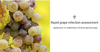 Application of visible/near infrared spectroscopy to assess the grape infection at the winery