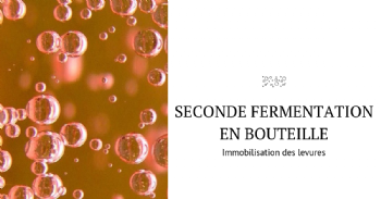 Immobilization of yeasts in oak chips and cellulose powder for use in bottle-fermented sparkling wine