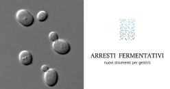 Protocollo ottimizzato per la ripresa degli arresti di fermentazione