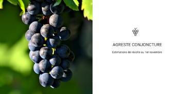 Une production viticole 2018 estimée à 46,6 millions d'hectolitres