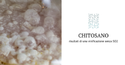 Volatile composition of sulphite-free white wines obtained after fermentation in the presence of chitosan