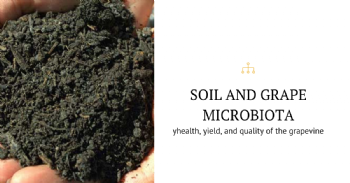The microbial signature of terroir as a biomarker of vine health and wine quality